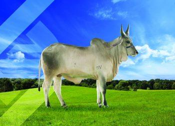 CA IRMA DE AGRICENTER