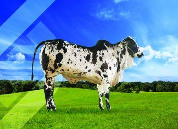 CA MARRAKECH DE AGRICENTER